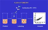 Flow cytometry procedure